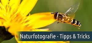 Entrümpeln Tipps Und Tricks : naturfotografie tipps und tricks f r bessere aufnahmen aquasoft hilfe ~ Markanthonyermac.com Haus und Dekorationen