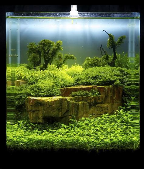 aquascape fish tank 112 best cube aquascape ideas images on