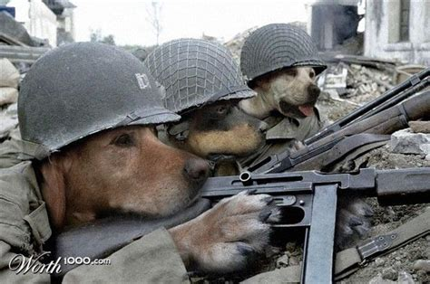 remember   military dogs  provide