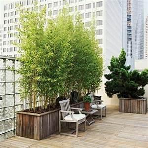 bambus pflanzen balkon ideen balcony pinterest With balkon teppich mit tapete bambus