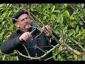 Comment Tailler Un Abricotier : fertiliser les arbres fruitiers youtube potager ~ Melissatoandfro.com Idées de Décoration