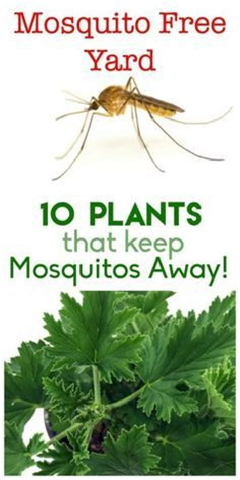 How To Keep Flies Away From Backyard by 1000 Images About Garden On Bird Feeders