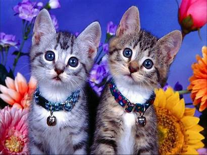 Pet Cats Pets Dog Cat Safe Kitten