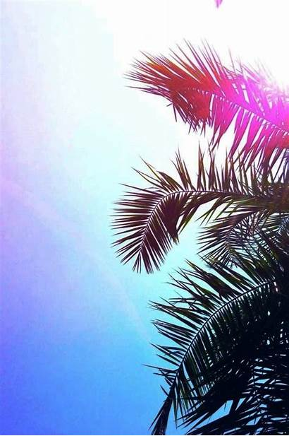 Iphone Wallpapers Girly Backgrounds Palm Fond Ecran