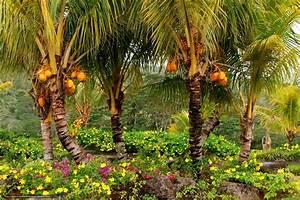 Download wallpaper Gardens, Mauritius Chamarel, coconut ...