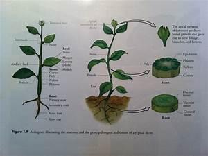 Philo 304 Study Guide  2012-13 Krecz