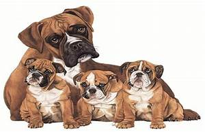 boxer breed types the three most popular boxer dog info With best dog food for boxers