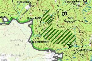 Fällen Von Bäumen : f llen von douglasien im nationalpark bayerischer wald ~ Eleganceandgraceweddings.com Haus und Dekorationen