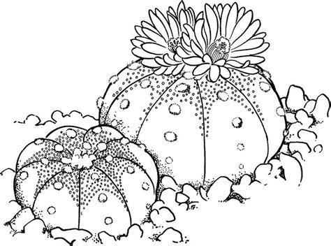 Kaktus Zum Ausdrucken