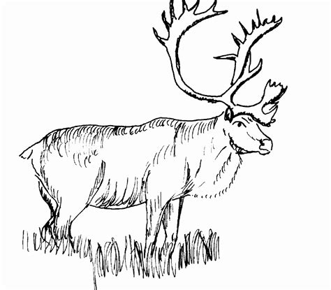 realistic animal coloring pages realistic animal coloring pages free printable animals