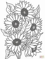Coloring Sunflower Printable sketch template