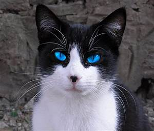 There I am! =^.~= black white cat - Google Search | My ...