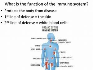 The Human Body Immune System  U2013 Theelsesite