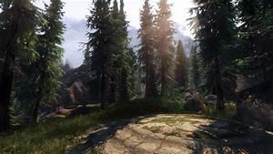 Majestic, Forest, At, Skyrim, Special, Edition, Nexus