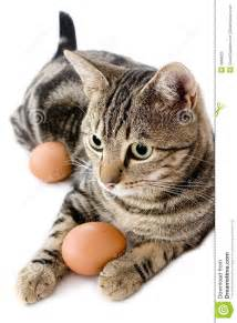 cat egg cat with egg royalty free stock photo image 3896825