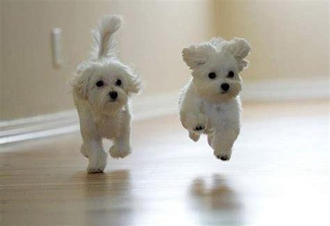 cute, dog, love, nature   image #682355 on Favim.com