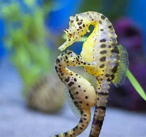 Sea Horse | SPEAKZEASY