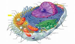 Uncovering the Mysteries of Mitochondria & Health - Happy ...