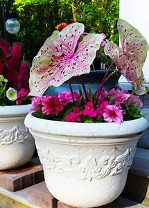 964 Best Images About Garden Club On Pinterest
