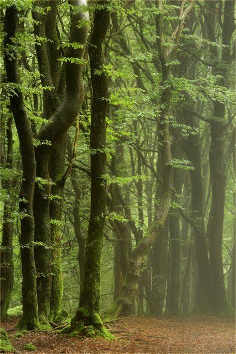 nebel zieht durch den wald forum fuer naturfotografen