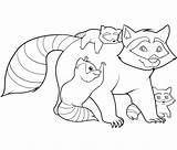 Raccoon Coloring Pages Printable Raccoons Bestcoloringpagesforkids sketch template