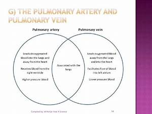 3 1 Resp Circulatory Answer Venn