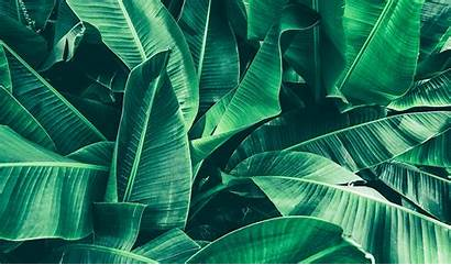 Leaf Tropical Nature Banana Spring Refresh Background