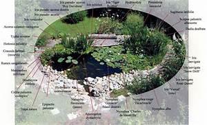 Plante Pour Bassin Extérieur : le bassin ~ Premium-room.com Idées de Décoration