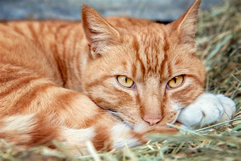 Tips On Convincing Feral Cats To Take Shelter  The Animal