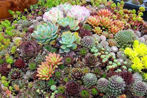 piante bellissime da giardino come creare bellissime aiuole fiorite in giardino