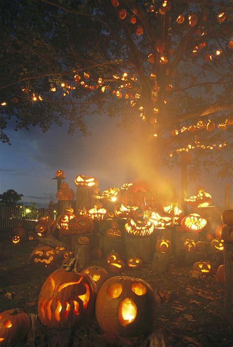 pumpkin tree pictures   images  facebook