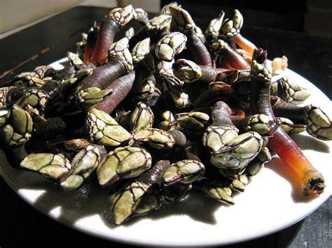 la cuisine de la mer pouce pieds à la portugaise cuisine de la mer
