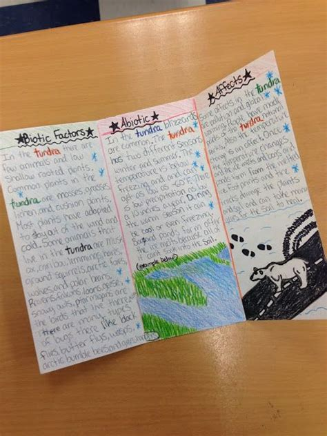 Brochure Templates For School Project by Amazing Student Work On An Ecosystems Brochure Research