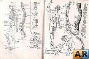 Anatomy And Drawing By Victor Perard  U00bb Arstyle Org