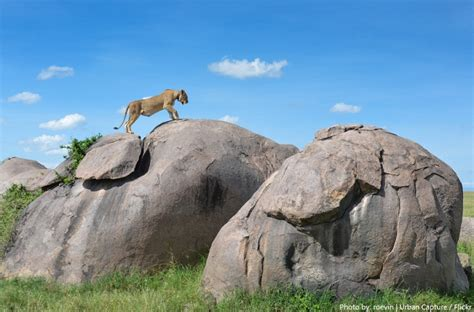 Interesting Facts About Serengeti National Park Just Fun