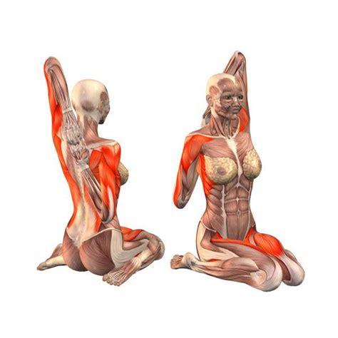 Boat Pose Kundalini Yoga by 181 Best Yoga Asanas Images On Pinterest Yoga Anatomy