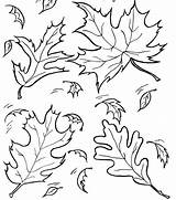 Coloring Lettuce Pages Fall Outline Library Clipart Leaf Clip Leaves Drawing Printable Collapse sketch template