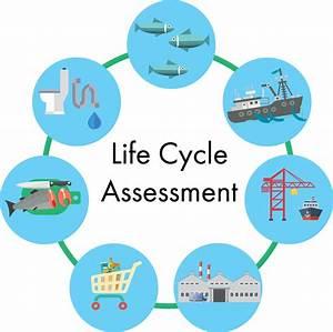 Minimising Environmental Impact Of Fishing