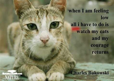 Cat And Dog Quotes Quotesgram