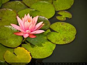Water Lily Pads Photography by Dave Allen