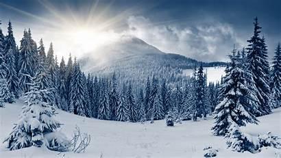 Winter Forest Mountain Snow 4k Trees Sun