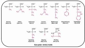Draw The Structure Of Any 1 Non-polar Amino Acid