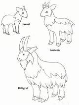 Billy Gruff Goats Three Coloring Activities Goat Colour Clipart Little Printable Pages Deviantart Activity Clip Pdf Drawings Print Library Downloads sketch template
