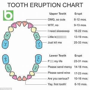 Parents Share A Babyology U0026 39 S Baby Teething Chart