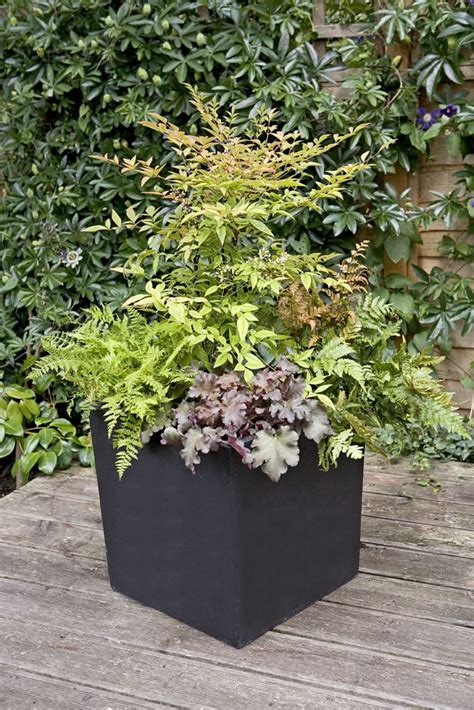 best potted plants for shade design for potted plants for shade ideas 24274