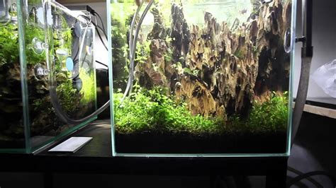 Aquascape Nano by Aquascape Maintenance Nano Lived Planted Aquarium Betta