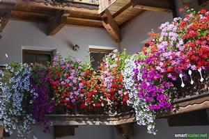 naturlich gartnern und den bienen helfen auch auf dem balkon With französischer balkon mit tipps für den garten