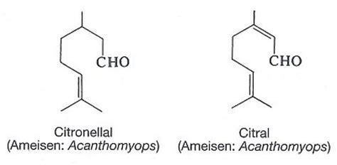 Citronella L by Prof Blumes Bildungsserver F 252 R Chemie Aus Prof Blumes E