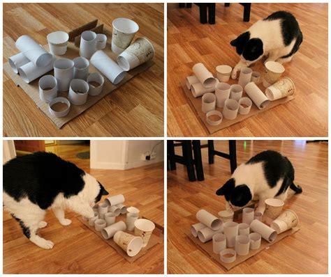 cat puzzle feeder diy puzzle feeder cat diy cat animal