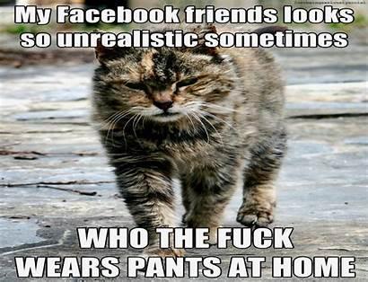 Meme Funny Cat Grumpy Humor Quote Wallpapers